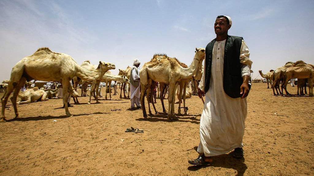 هل تعرف سوق الإبل في السودان